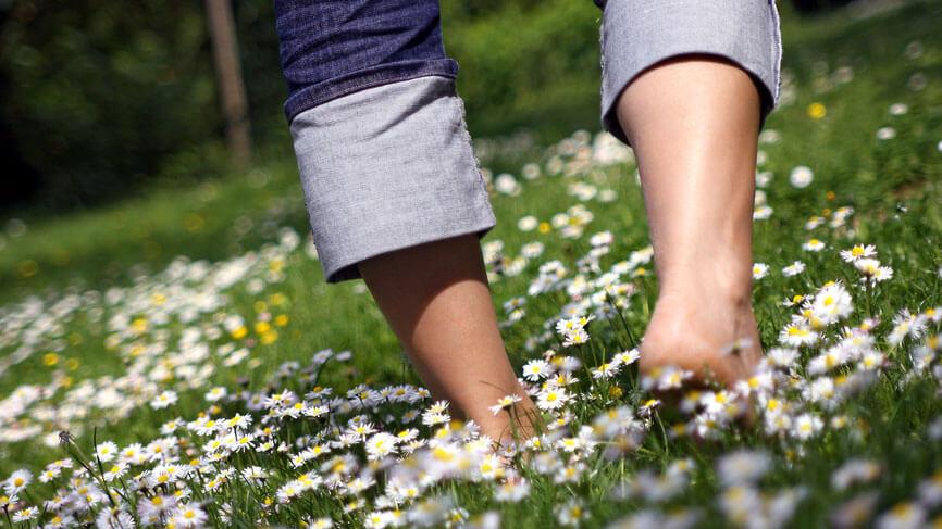Barfußwandern auf einer satt-grünen Blumenwiese.